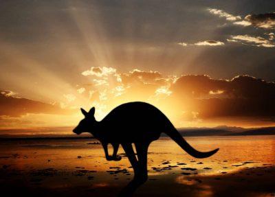 Top Best Winning Business From Kangaroos With Tenders In Melbourne Australia 2020